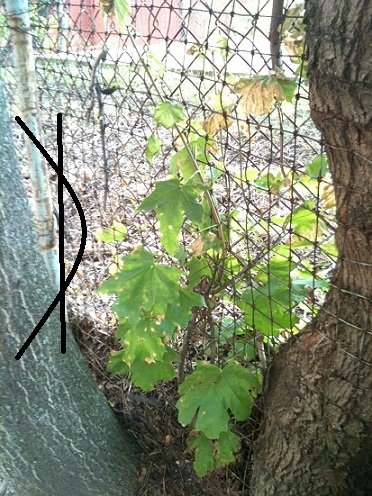 g Time for an Interesting Photo: Tree consumes Fence